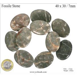 Semi précieuses perles de fossile - Ovale/40 mm - Gris